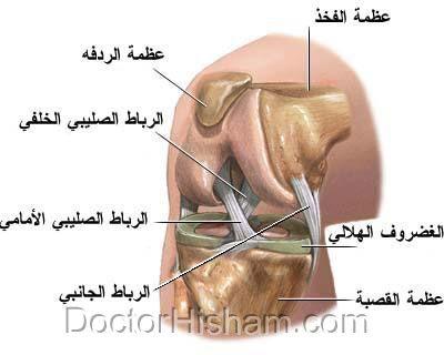 وصف الركبة