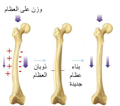 boneelectric