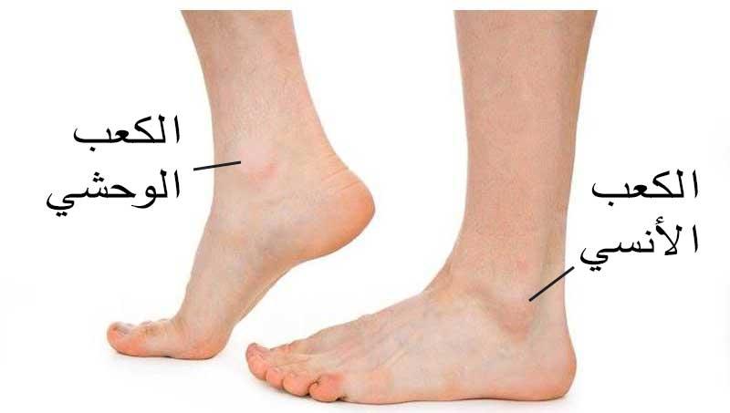 كسور الكاحل Ankle Fractures عيادة الركبة و الفخذ