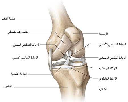 المدونة عيادة الركبة و الفخذ